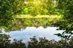 Il lago è incorniciato da fogliame verde sotto il sole luminoso fotografie stock