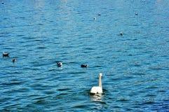 Il lago calmo e gli uccelli Fotografia Stock Libera da Diritti