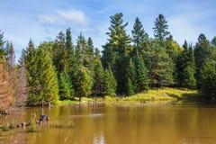 Il lago circondato dagli abeti sempreverdi Fotografia Stock