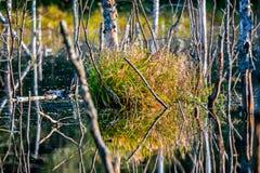 Il lago con gli alberi caduti Immagini Stock Libere da Diritti
