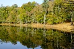 Il lago della foresta di ombra nel parco nazionale di Gargano Immagine Stock Libera da Diritti