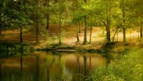 Il lago forest Fotografia Stock