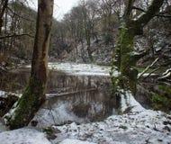 Il lago fra due alberi in foresta innevata con il terreno boscoso ha riflesso nell'acqua Fotografia Stock