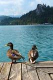 Il lago ha salassato le anatre del castello immagini stock libere da diritti