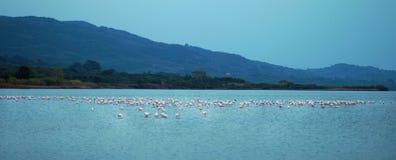 Il lago Korission è un ecosistema molto importante di Corfù, in cui molti uccelli migratori come i fenicotteri rosa si fermano fotografia stock