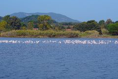 Il lago Korission è un ecosistema molto importante di Corfù, in cui molti uccelli migratori come i fenicotteri rosa si fermano fotografie stock