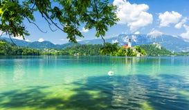 Il lago la montagna delle alpi ed ha sanguinato in Slovenia, Europa Fotografie Stock Libere da Diritti