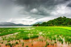 Il lago lak ed il riso verde sistemano, provincia di Dak Lak, Vietnam Immagine Stock Libera da Diritti
