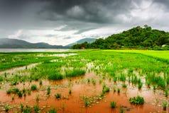 Il lago lak ed il riso verde intenso sistemano, provincia di Dak Lak Immagini Stock