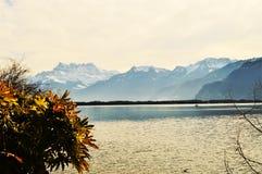 Il lago Lemano e piante asciutte, Svizzera, Europa Immagine Stock
