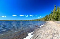 Il lago Lewis nel Yellowstone fotografia stock