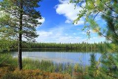 Il lago nel legno Immagini Stock