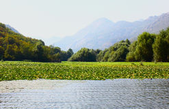 Il lago nel Montenegro Fotografia Stock