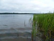 Il lago pike Fotografie Stock