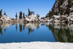 Il lago solo pine Immagine Stock