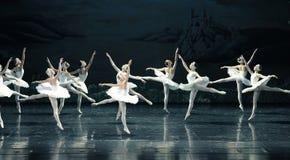 Il lago swan di famiglia-balletto del cigno fotografia stock libera da diritti
