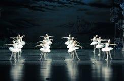 Il lago swan di Tribù-balletto del cigno fotografia stock