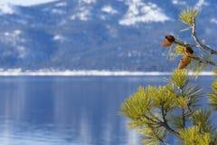 Il lago Tahoe nell'inverno con il pino e la pigna come confine sul lato destro dell'immagine di sfondo Fotografie Stock Libere da Diritti