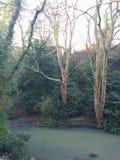 Il lago trees imbussola il freddo dell'inverno Fotografie Stock