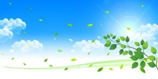 Il laisse le fond vert frais d'arbre Photographie stock libre de droits