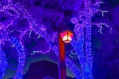 Il lampione e gli alberi illuminati sul Natale fanno il giardinaggio ai giardini 1 di Busch fotografie stock