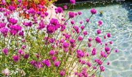 Il lampone fiorisce vicino alla fontana azzurrata nel parco a tema di Gardaland in Castelnuovo Del Garda, Verona, Italia Fotografia Stock