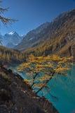 Il larice giallo contro lo sfondo dell'acqua del turchese del lago e una montagna abbelliscono Fotografia Stock