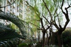 Il lasciare della palma in giardino - fondo di costruzione vago Immagini Stock