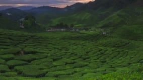 Il lasso di tempo più bello di paesaggio alla piantagione di tè in Malesia stock footage
