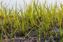 Il lato dell'erba ha nuotato Fotografia Stock Libera da Diritti