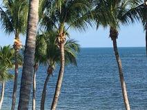 Il lato dell'Oceano Atlantico della spiaggia di Key West Florida ha allineato con le palme fotografie stock