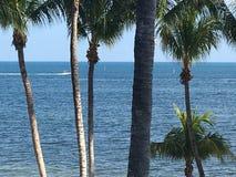 Il lato dell'Oceano Atlantico della spiaggia di Key West Florida ha allineato con le palme immagini stock libere da diritti