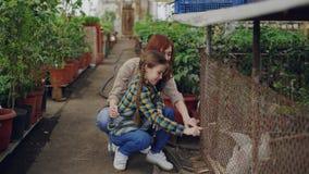 Il lavoratore della serra e sua figlia emozionante stanno giocando con i conigli in gabbia dentro la grande serra Animali domesti video d archivio
