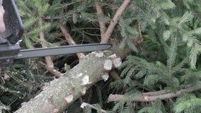 Il lavoratore ha tagliato un ramo di albero dalla motosega stock footage
