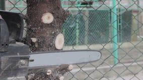 Il lavoratore ha tagliato un ramo di albero dalla motosega video d archivio