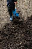 Il lavoratore scava il suolo nero con la pala nell'orto Immagini Stock