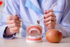 Il lavoro di pratica del dentista sul modello del dente Immagini Stock Libere da Diritti