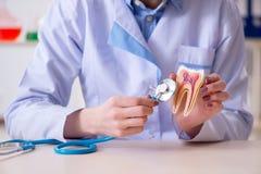 Il lavoro di pratica del dentista sul modello del dente Fotografia Stock Libera da Diritti