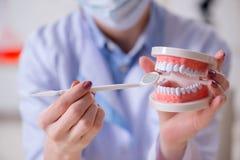 Il lavoro di pratica del dentista sul modello del dente Immagine Stock Libera da Diritti