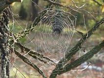Il lavoro di un ragno importante fotografie stock libere da diritti