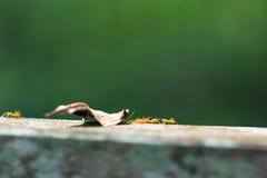 Il lavoro di una formica, Fotografia Stock