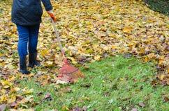 Il lavoro rosso del giardino della mano dello strumento del rastrello della donna lascia l'autunno Immagine Stock