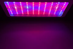 Il LED coltiva l'indicatore luminoso Immagine Stock Libera da Diritti