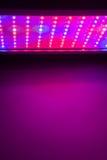 Il LED coltiva l'indicatore luminoso Fotografia Stock Libera da Diritti
