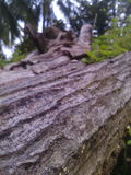 Il legno Fotografia Stock