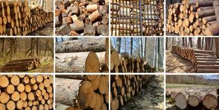 Il legno accatasta il collage. Fotografia Stock