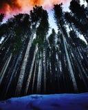 Il legno bruciante immagini stock