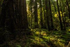 Il legno del muir fotografia stock libera da diritti