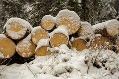Il legno del taglio collega la neve Fotografia Stock