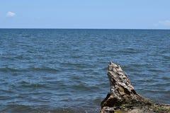 Il legno della deriva ha fuso dalle onde di oceano alla riva di mare fotografia stock